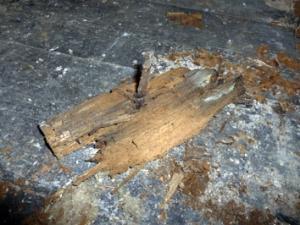 Wood Rotting Fungi